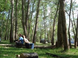 Četinarska šuma i mi